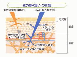 紫外線、UV